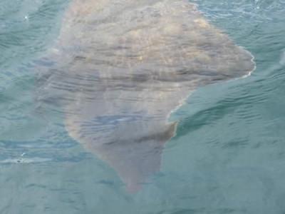 釣具の海友の2019年8月21日(水)5枚目の写真