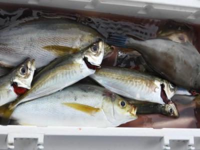 釣具の海友の2019年8月24日(土)3枚目の写真