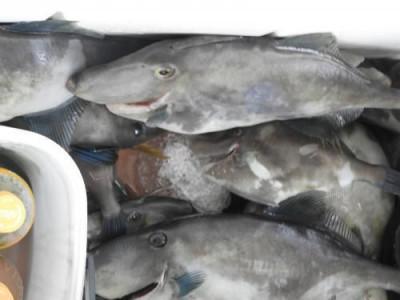 釣具の海友の2019年8月24日(土)4枚目の写真