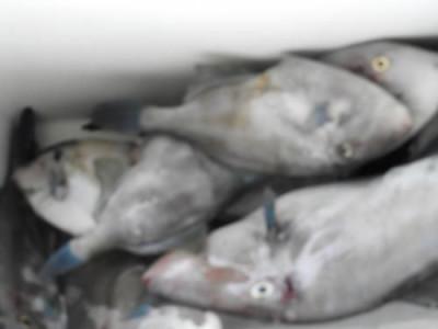 釣具の海友の2019年8月25日(日)5枚目の写真