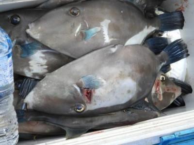 釣具の海友の2019年8月26日(月)5枚目の写真