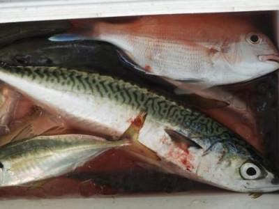 釣具の海友の2019年9月5日(木)4枚目の写真
