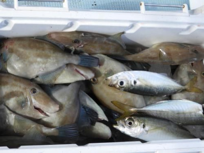 釣具の海友の2019年9月7日(土)3枚目の写真