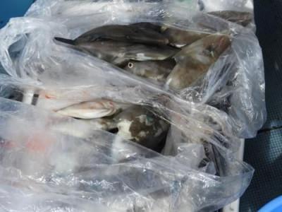 釣具の海友の2019年9月7日(土)5枚目の写真