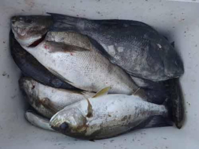 丸銀釣りセンターの2019年8月22日(木)4枚目の写真