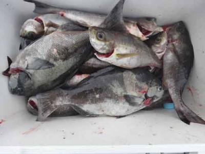 丸銀釣りセンターの2019年8月25日(日)3枚目の写真