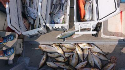 海皇丸の2019年9月11日(水)3枚目の写真