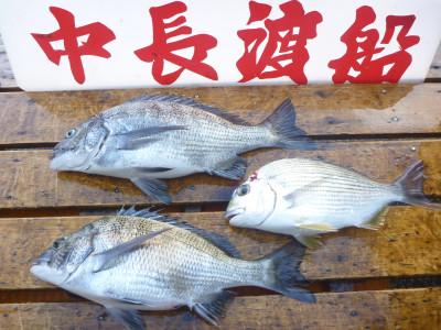 中長渡船の2019年9月17日(火)3枚目の写真