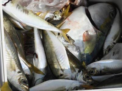 釣具の海友の2019年9月14日(土)3枚目の写真