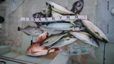 アラタニ釣具店の2019年9月28日(土)1枚目の写真