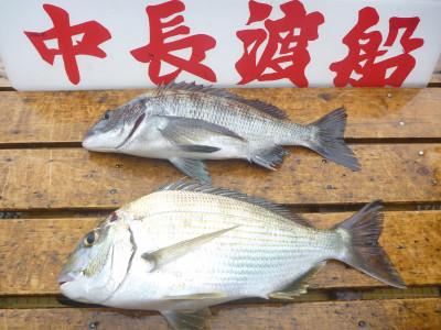 中長渡船の2019年9月27日(金)2枚目の写真