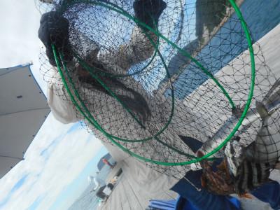 由良海つり公園&釣堀ランドの2019年9月29日(日)2枚目の写真