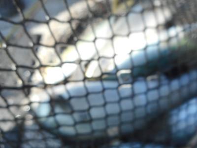 由良海つり公園&釣堀ランドの2019年9月30日(月)3枚目の写真