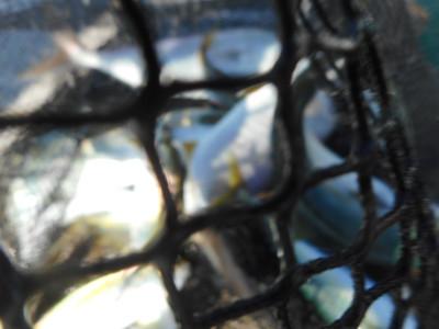 由良海つり公園&釣堀ランドの2019年9月30日(月)4枚目の写真
