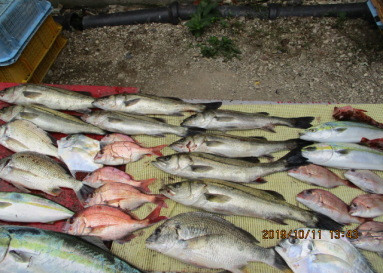 奥村釣船の2019年10月11日(金)5枚目の写真