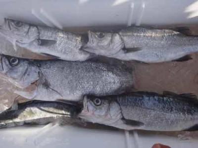 丸銀釣りセンターの2019年9月17日(火)3枚目の写真