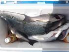 丸銀釣りセンターの2019年9月19日(木)4枚目の写真