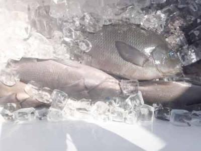 丸銀釣りセンターの2019年9月24日(火)5枚目の写真