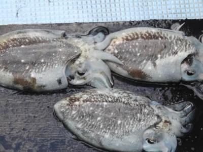 釣具の海友の2019年10月14日(月)5枚目の写真