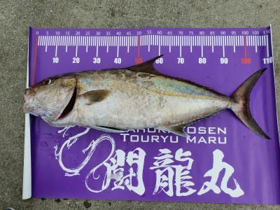 闘龍丸の2019年10月20日(日)2枚目の写真