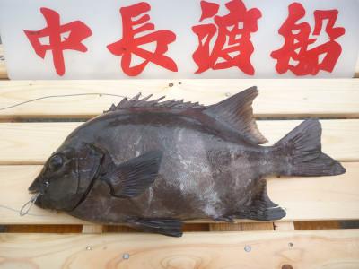 中長渡船の2019年10月20日(日)3枚目の写真