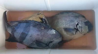 乙島丸の2019年10月16日(水)1枚目の写真