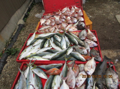 奥村釣船の2019年10月20日(日)4枚目の写真