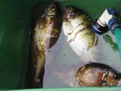 釣具の海友の2019年10月24日(木)4枚目の写真