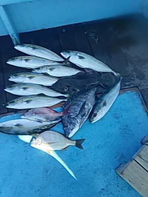 すずらん丸の2019年10月23日(水)1枚目の写真