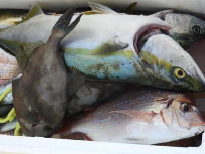 釣具の海友の2019年10月26日(土)3枚目の写真