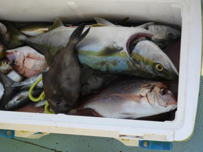釣具の海友の2019年10月26日(土)4枚目の写真