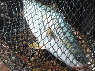 由良海つり公園&釣堀ランドの2019年10月28日(月)2枚目の写真
