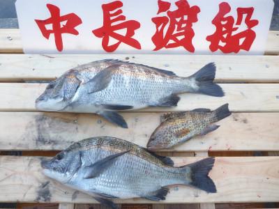 中長渡船の2019年10月31日(木)1枚目の写真