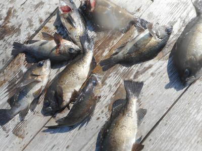 由良海つり公園&釣堀ランドの2019年10月30日(水)2枚目の写真