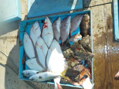 釣船 英造丸の2019年11月5日(火)1枚目の写真