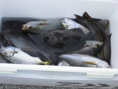 磯釣佐市丸の2019年11月6日(水)1枚目の写真