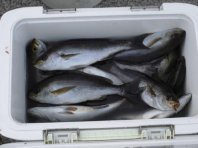磯釣佐市丸の2019年11月6日(水)2枚目の写真