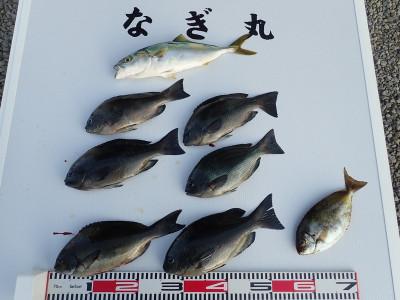 なぎ丸渡船の2019年11月9日(土)2枚目の写真