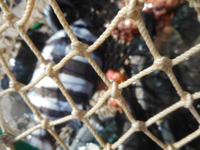由良海つり公園&釣堀ランドの2019年11月10日(日)5枚目の写真