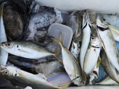 釣具の海友の2019年10月29日(火)1枚目の写真