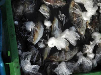 釣具の海友の2019年11月10日(日)4枚目の写真