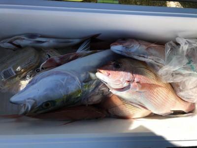 釣り船 黒潮丸の2019年11月15日(金)3枚目の写真