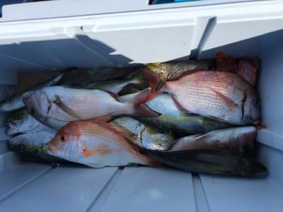 釣り船 黒潮丸の2019年11月16日(土)1枚目の写真