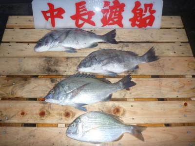 中長渡船の2019年11月16日(土)2枚目の写真