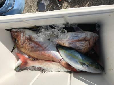 釣り船 黒潮丸の2019年11月17日(日)3枚目の写真