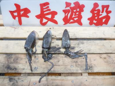 中長渡船の2019年11月19日(火)2枚目の写真