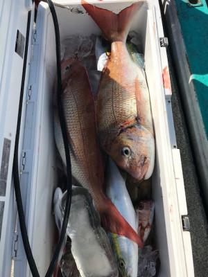 釣り船 黒潮丸の2019年11月20日(水)3枚目の写真