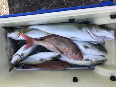 釣り船 黒潮丸の2019年11月21日(木)1枚目の写真