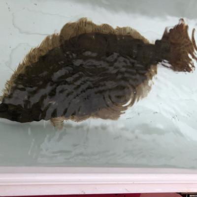 第八幸松丸の2019年11月22日(金)4枚目の写真