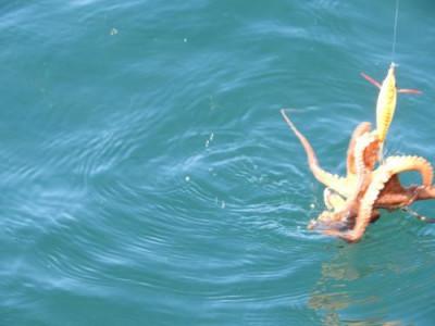 釣具の海友の2019年11月15日(金)2枚目の写真
